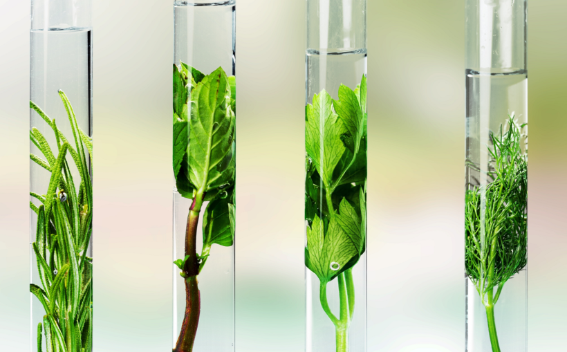 What Are Ethanol Extraction Methods?