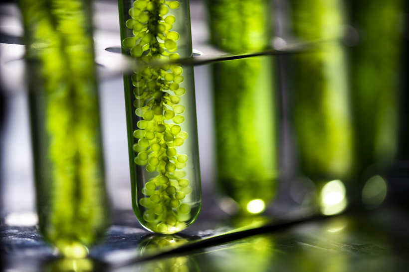Can Ethanol Be Used For Plant Extraction?